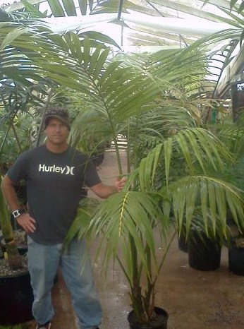 New Plant Arrivals At Jungle Music Palms And Cycads Older