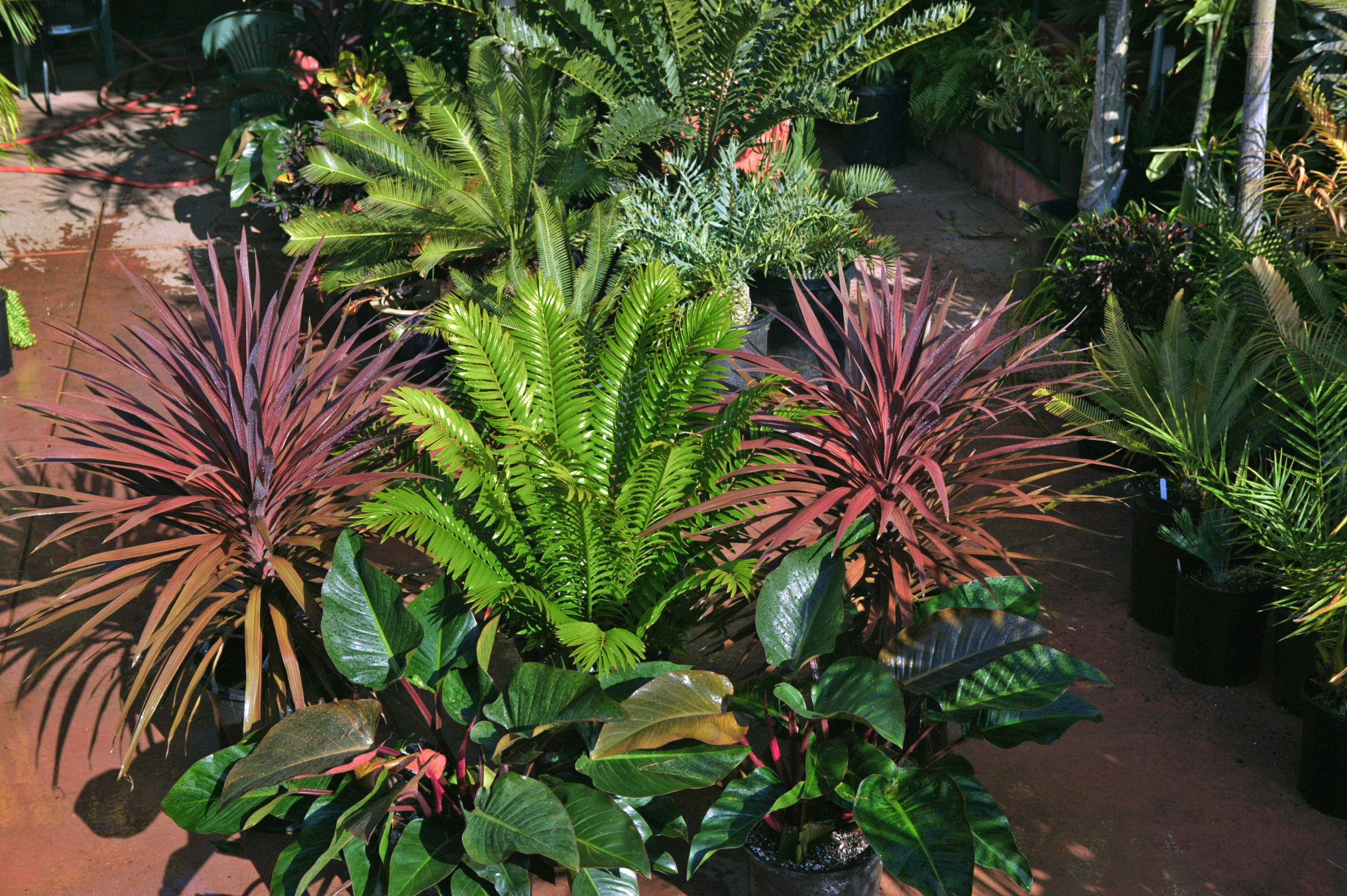 palm tree nursery san diego On tropical landscaping plants