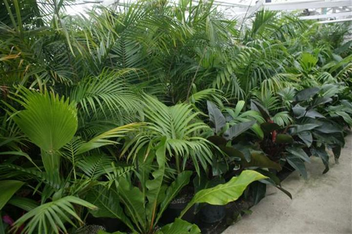 Palms And Cycads Tropical Plants