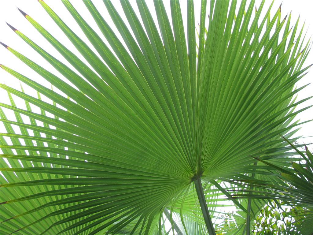 AS YOU LEARN MORE, START MAKING A LIST OF THE SPECIES OF PALMS THAT
