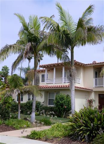 Palm House Plants