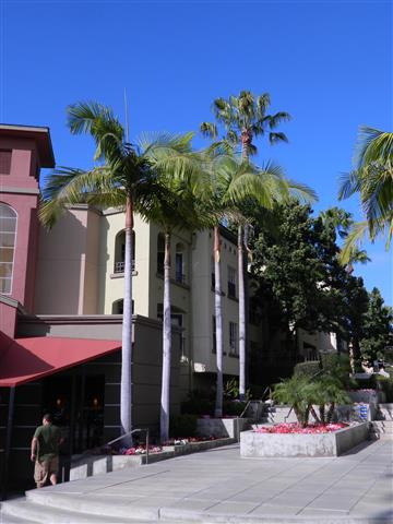 Row of King Palms in shopping center