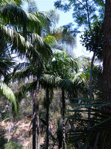 King Palms at the home