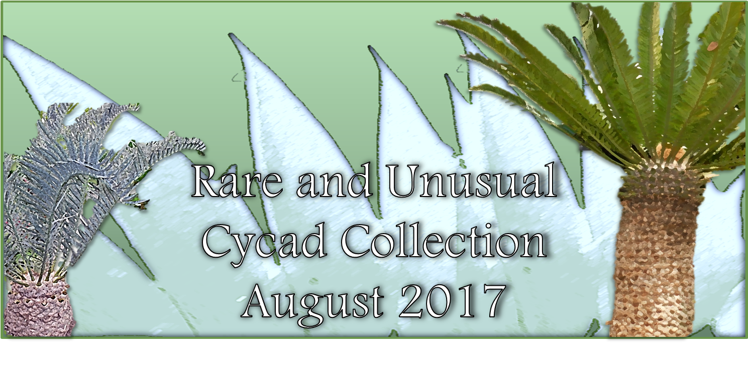 Cycad Collection August 2017 banner