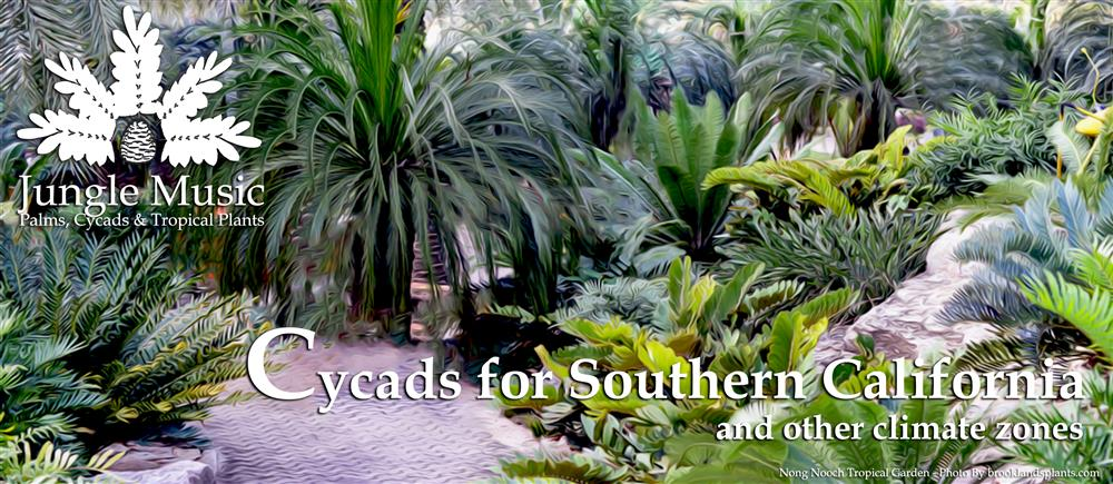 Banner Cycads For Southern California