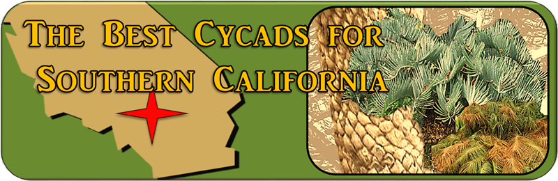 Best Cycads for Southern California Banner
