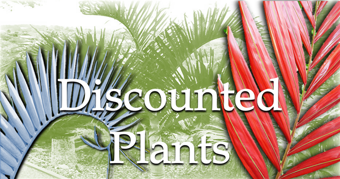 Discounted Plant Banner 2018
