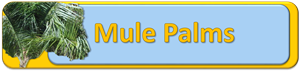 Mule Palm Banner