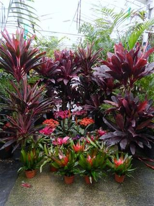 Colorful Companion Plants