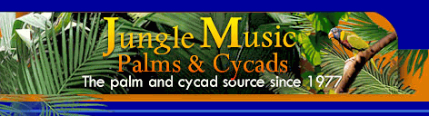 Jungle Music Logo Banner