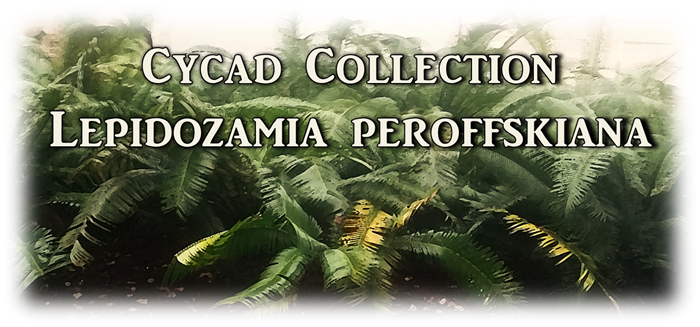 Lepidozamia collection banner