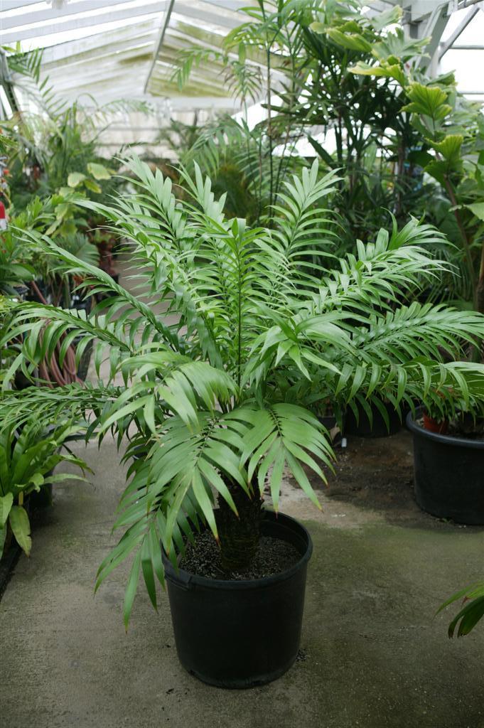 Jungle Music Palm Trees