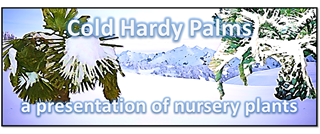 Cold Hardy Palms at Nursery Banner