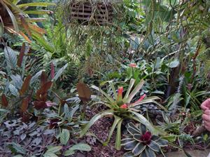 Exotic Tropical Plants