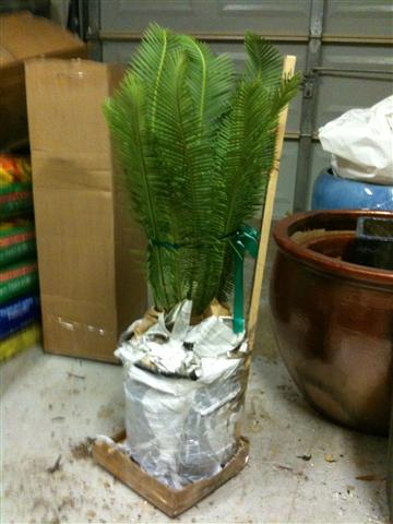 Another Shipped plant on arrival