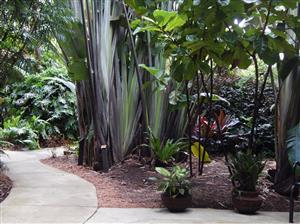 Lush Tropical Landscape Plants