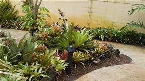 Tropical companion plants