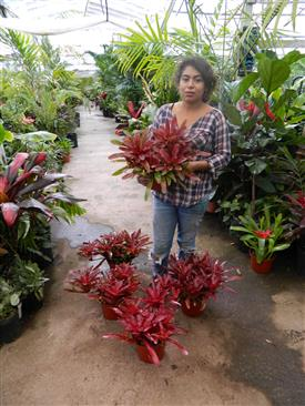 Assorted colorful bromeliads