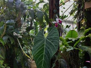 Tropical companion plants in the landscape