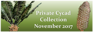November Cycad Collection Banner 2017