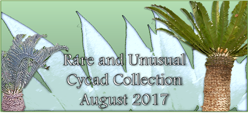 Cycad Collection Banner Aug 2017