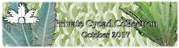 Cycad Collecction Banner Oct 2017