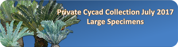 Cycad Collecton July banner