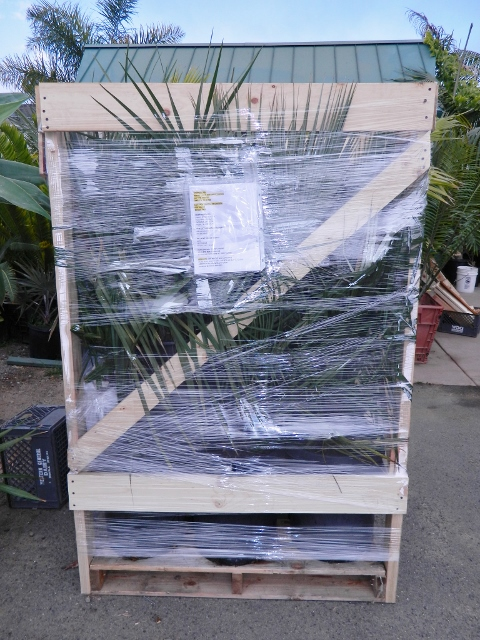 pallet loaded with plants