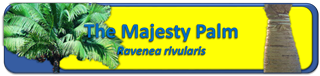Majesty Palm Banner