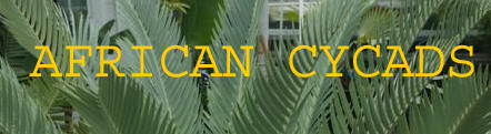 African Cycads