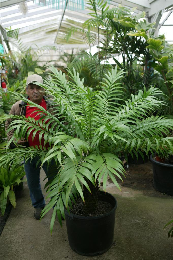 Joaquin and cycad