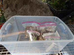 Bin with germinating baggies