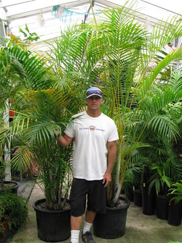 Staff with plants