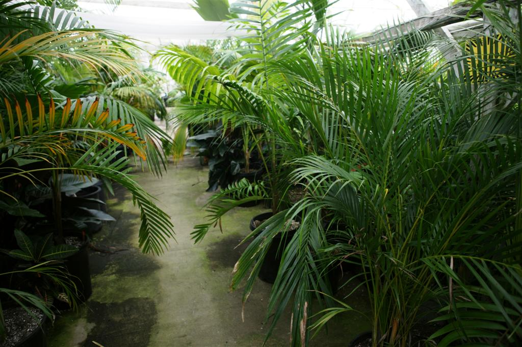 Nursery Tropical Plants Color