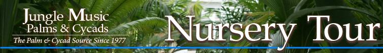 Palm Tree Nursery San Diego California
