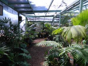 Jungle music nursery encinitas ca for Jungle house music
