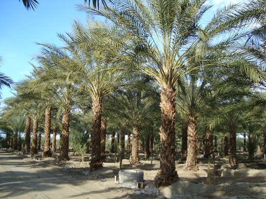 Many Sized Plants To Choose From Up Large Overhead Specimens Our Present Inventory Includes Rare And Unusual Species Of Palm Trees Cycads