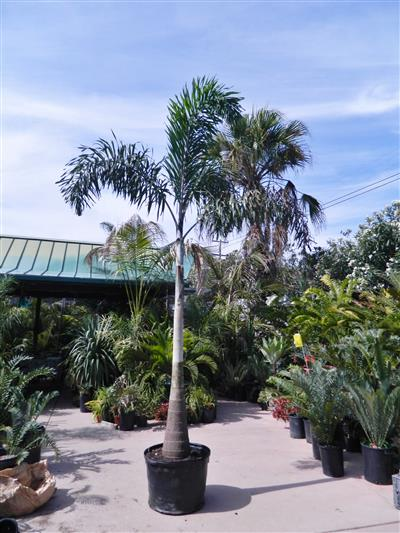 Photos Of Some Nursery Plants
