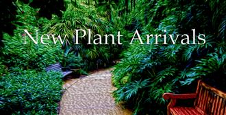 New Plant Arrivals Banner Feb 2019