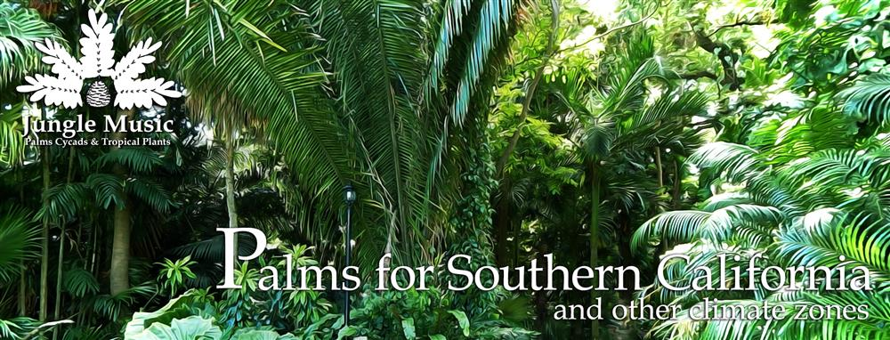 Palm Tree Species For Southern California