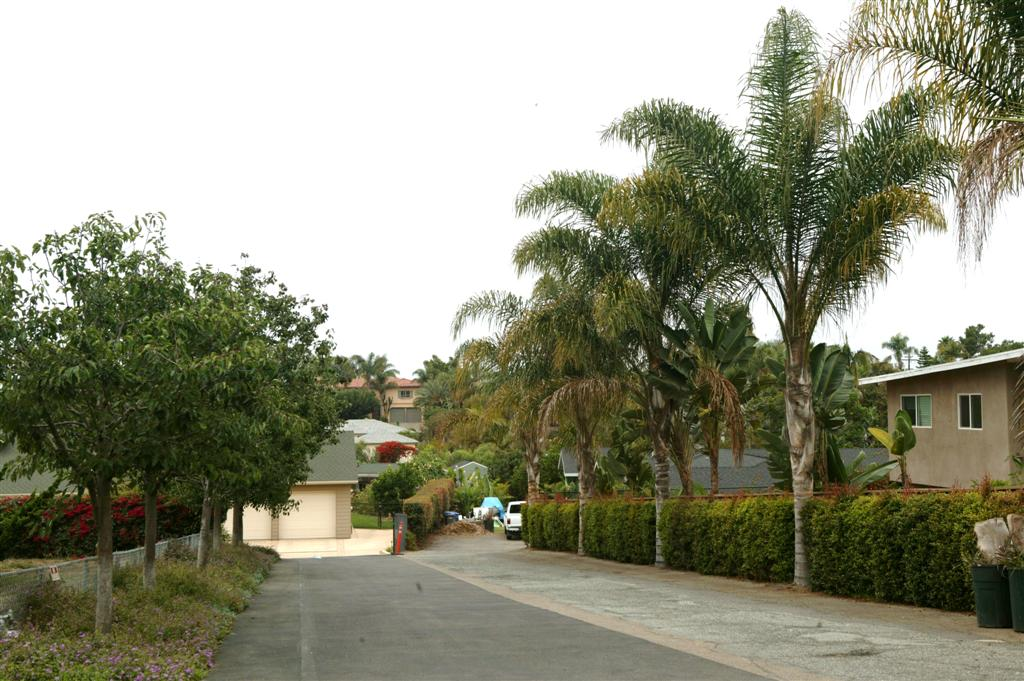 Queen Palms driveway