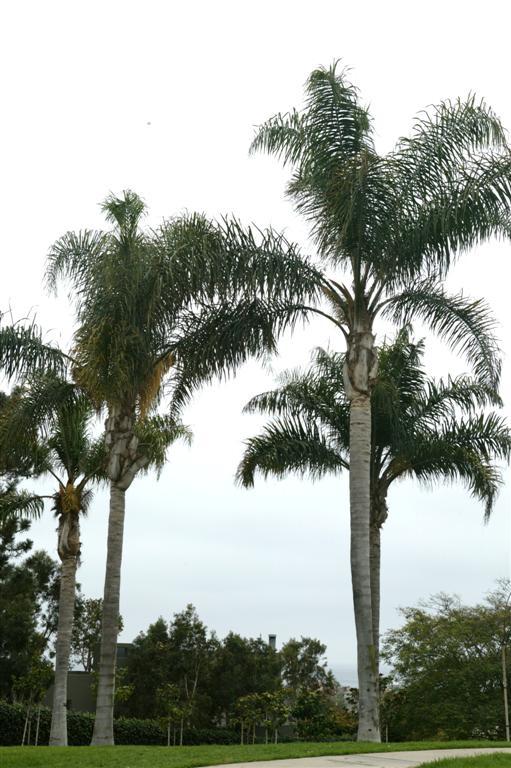 Queen Palms Driveway Park