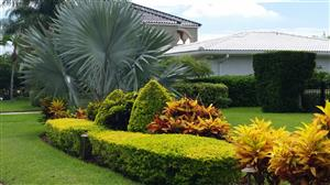 Tropical Landscape Emphasis On Palm Trees Cycads And Companion