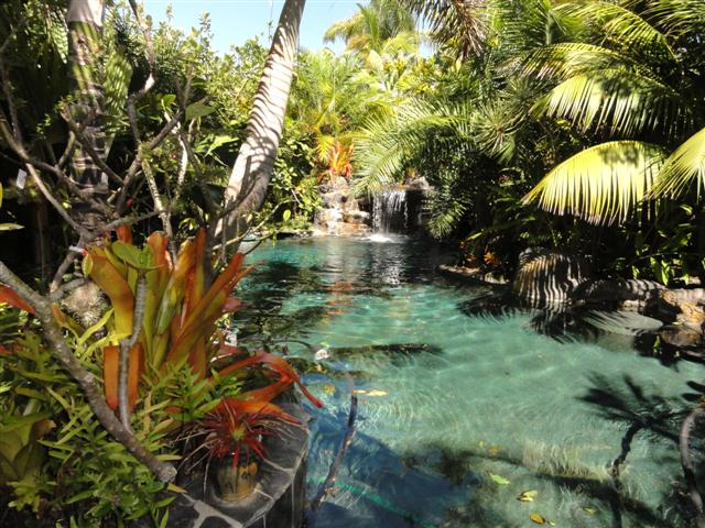 Pool And Tropical Plants By G A Lush Garden Around Pathways