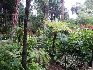 Tropical landscape emphasis on palm trees cycads and companion plants tropical landscape workwithnaturefo