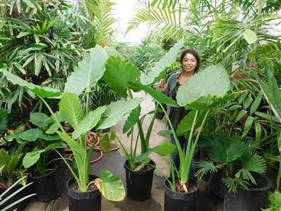 Tropical Plants Rainforest Plants That Look Great In The Garden