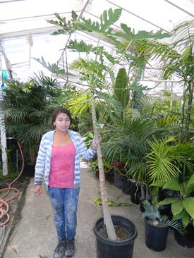 Cell Phone Version Tropical Plants Descriptions And Photos