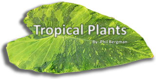 Tropical Plant Availability Banner