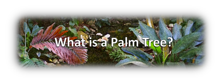 What is a Palm Tree Banner