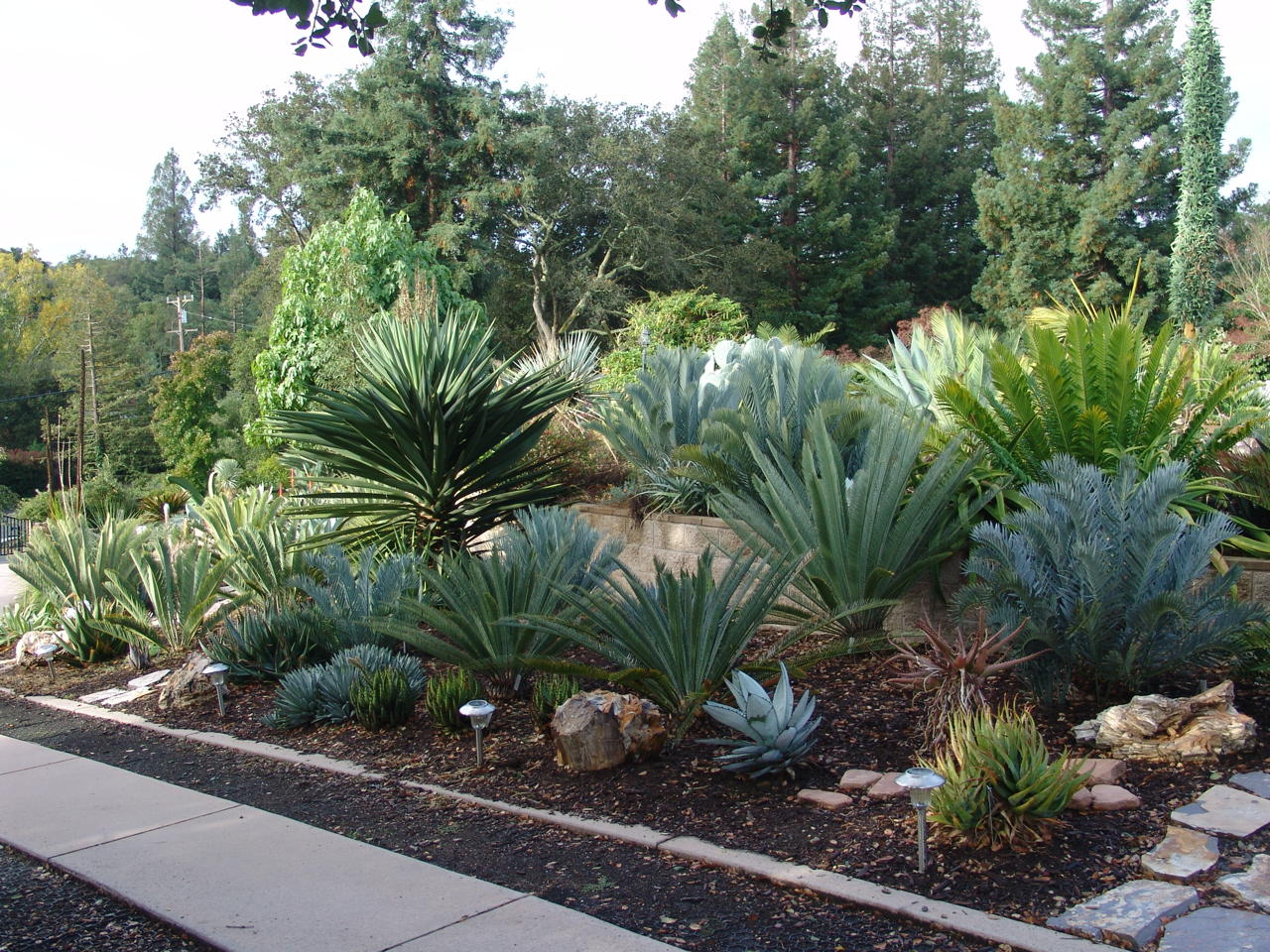 water conservation with cycads